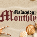 Malacology Monthly: Pilot Episode