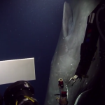 Video: Rare sperm whale encounter with deep-sea ROV