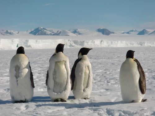 [http://www.polartrec.org/expeditions/weddell-seals-in-the-ross-sea/photos?page=9]