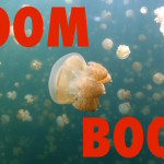 Boom Boom like a Jellyfish