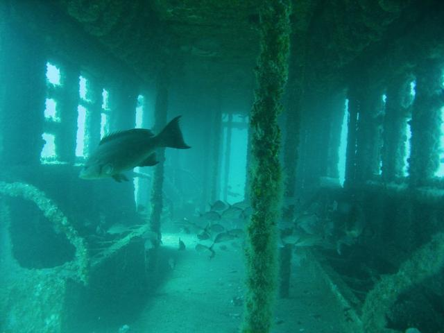 Gothamist Photo via Express Water Sports - you can scuba dive this site too!