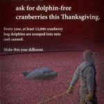 This Thanksgiving Remember the Cranberry Bog Dolphin