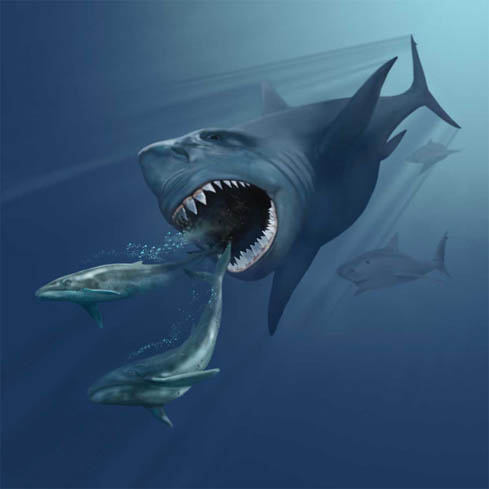 how we know megalodon doesn t still exist deep sea news