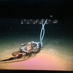 The Video of Giant Isopods Eating an Alligator in the Deep Sea You Must Watch!