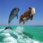 Dolphins on drugs