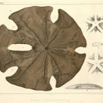 Echinodermata Monographs