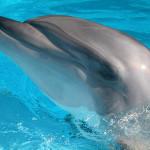 TGIF: Dolphin