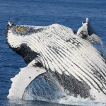 Let The Whales Die
