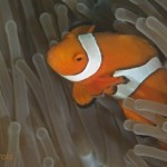 Finding Nemo by DNA parentage analysis