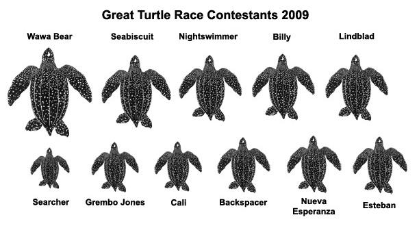 leatherback_size_matters1
