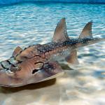 Giant Isopods and Shark Rays in Cincinnati?