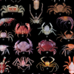 Mad Taxonomic Skillz III – Crustacean Hunt!