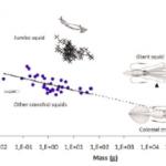 The Tide Pool: Slow Colossal Squid?, Lantern Shark's Light Switch, Longer is Faster (in Sperm)