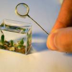 World's Tiniest Aquarium