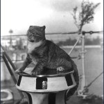 """I can haz capstan ride?"" Cats at sea!"