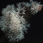 Welcome To Interwebs Save the Deep Sea Blog