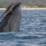 The Science of Dolphins Whale-Sliding