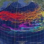 Japanese tsunami debris link roundup