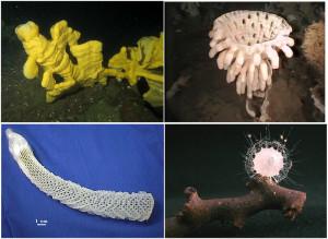 glass sponges