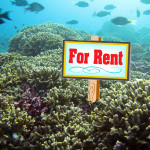 For sale?: one reef, well-loved