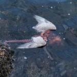 Puny Seagull vs. Badass Octopus