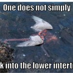 TGIF: One does not simply walk into the lower intertidal