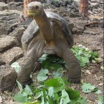 Encomium: Lonesome George