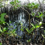 Guest Post: Crude oil insults in the Caribbean
