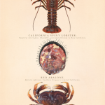 From coast to canvas: The art of biological illustration