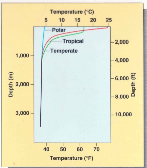 [Thermocline graphic] Oceanic water temperature drops quickly below the surface- no matter what climate. {http://faculty.scf.edu/rizkf/oce1001/ocenotes/chap6.htm}