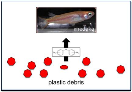plasticPBDEfishbioaccumulate