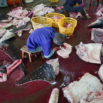 Whale shark slaughterhouse exposed in China