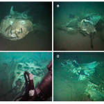 Dead Elasmobranchs on the Seafloor are Not as Appetizing as One Might Assume