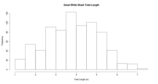 Historgram of sizes of Great White Sharks.  Unpublished data from L. Gaskins