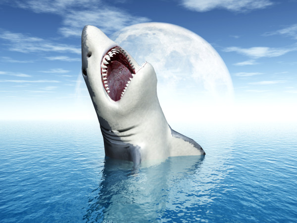 Known only to few people, Great Whites actually turn into weresharks during full moons. Image courtesy of Shutterstock.