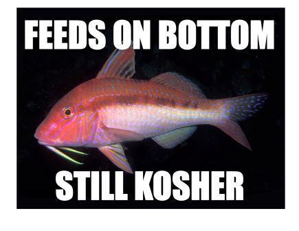 The Blue-striped Goatfish is hip with the Rabbi. Photo courtesy of Ian Skipworth/Wikimedia Commons.