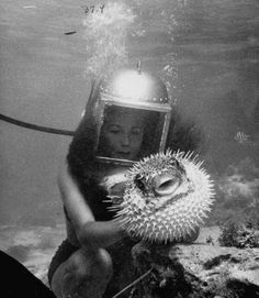Agitated, inflated, and armed, the porcupine fish just wants to be left alone.