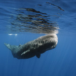 So, You Want to Live in the Water? A Tale of Why Aquatic Mammals are So Big