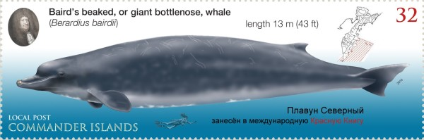 he Baird's Beaked Whale, commemorated as a Russian stamp, along with hair hopper Vitus Bering.