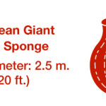What is the world's largest barrel sponge?