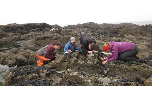 July experimental monitoring and surveys 136