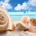 Malacology Monday