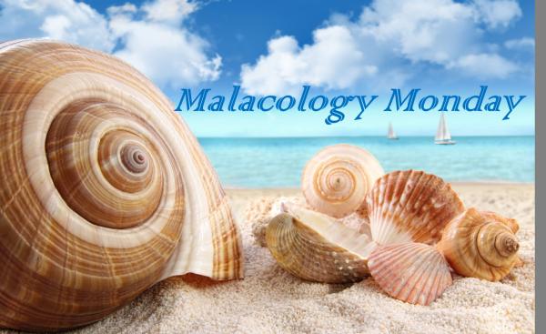 MM Malacology Monday
