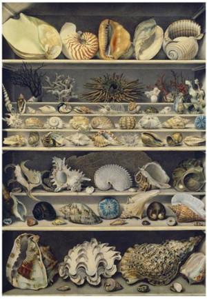 Malacology Collection Alexandre Isidore Leroy de Barde Choix de coquillages c. 1810