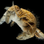 For Hoff Yeti Crabs Food, Sex, and Birth Determine Living Space At Vents