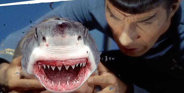 shark.001