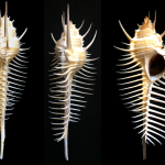 Malacology Monthly: Spines and How to Use Them