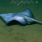 Come Take A Field Deep-Sea Biology Class With Me!